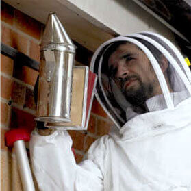 Facilities management - wasp management